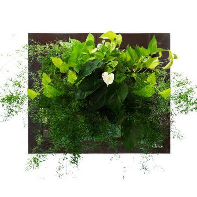 Автополив цветов в интернет магазине