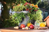 Ягоды и овощи доступнее с Cascada