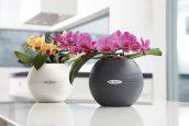 Орхидеи в кашпо Puro Color 20