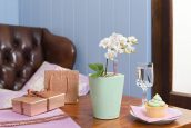 Орхидея-мини в Mini-DELTINI