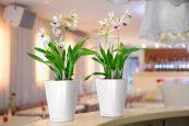 Орхидеи в кашпо Lechuza Deltini