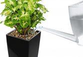 Полив растений в MINI-Cibi