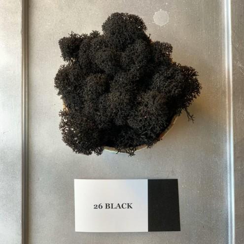 Стабилизированный мох 26 Black