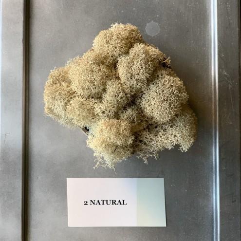 Стабилизированный мох 2 Natural