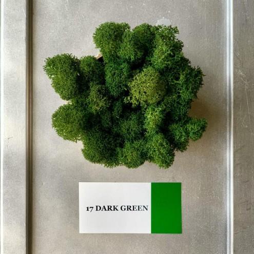 Стабилизированный мох ягель 17 Dark Green