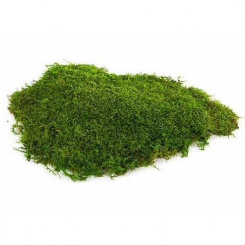 Плоский стабилизированный мох