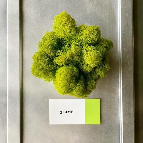 Стабилизированный мох ягель 3 Lime