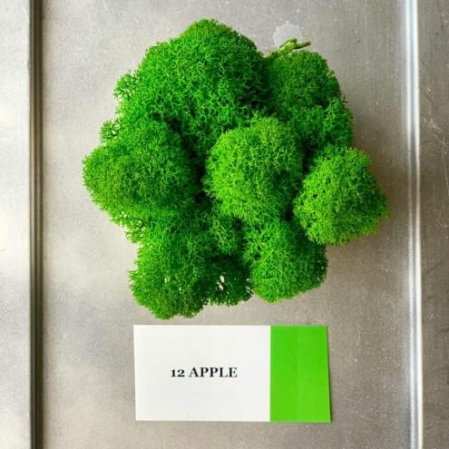 Стабилизированный мох ягель 12 Apple