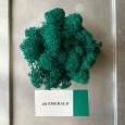 Стабилизированный мох ягель 29 Emerald