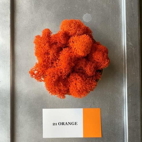 Стабилизированный мох ягель 21 Orange