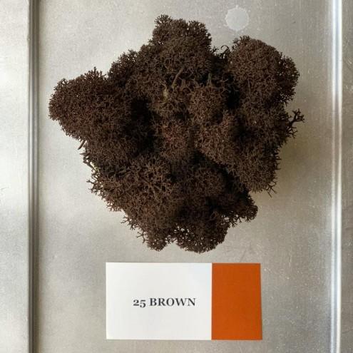 Стабилизированный мох ягель 25 Brown
