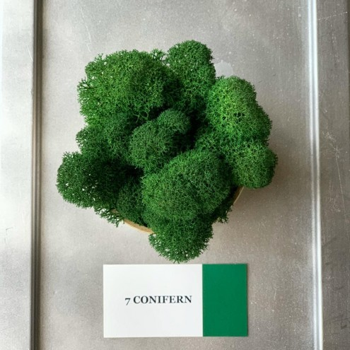 Стабилизированный мох ягель 7 Conifern