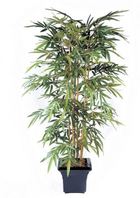 Бамбук Новый