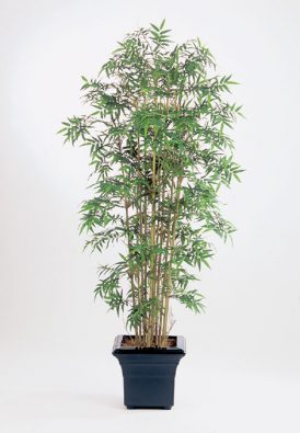Бамбук Новый японский