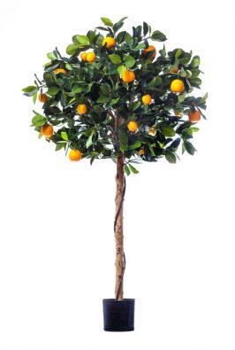 Мандарин Голден Оранж штамбовый