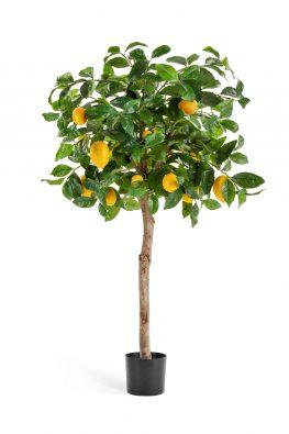 Лимонное дерево с плодами на штамбе