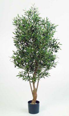 Олива Форест с плодами 180 см