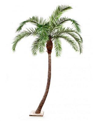 Гигантская изогнутая Финиковая пальма