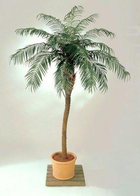 Финиковая пальма де Люкс