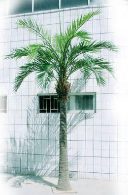 Гигантская финиковая пальма