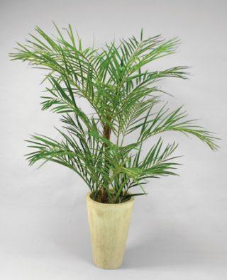 Пальма Арека 170 см