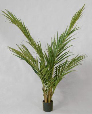 Пальма 170 см