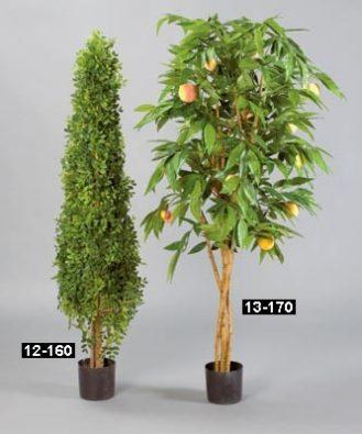 Персиковое дерево