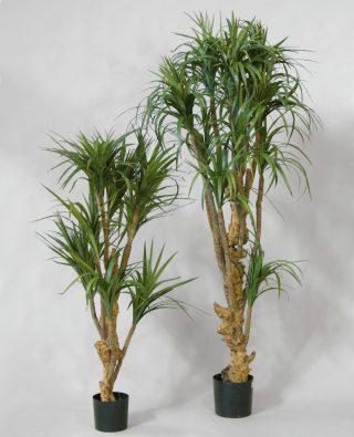Цветок Драцена 150 см