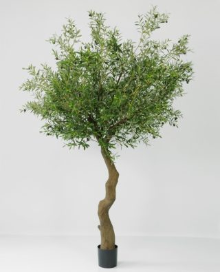 Дерево оливковое 240 см