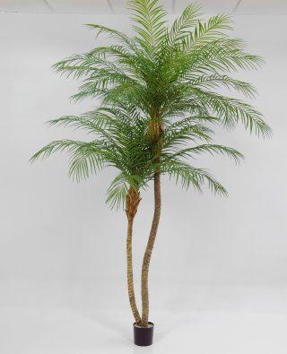 Пальма 260 см