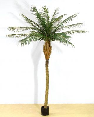 Пальма 240 см