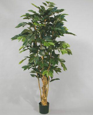 Кофейное дерево 170 см 2 шт