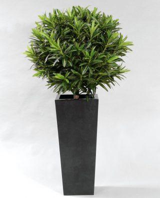 Кротон-шар 100 см