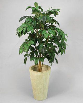 Кофейное дерево 140 см 2шт