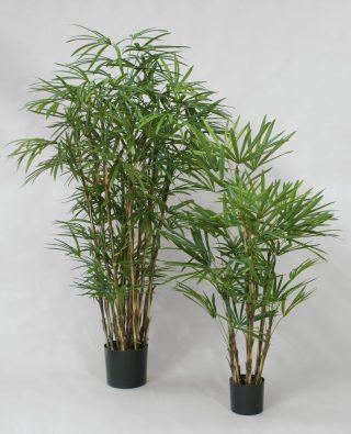 Бамбук Рафис 170 см