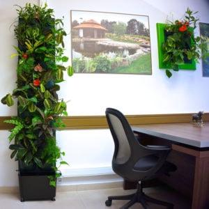 Озеленение офиса : новинки от «LETO Studio»