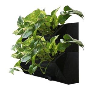 Растения в фитомодуле