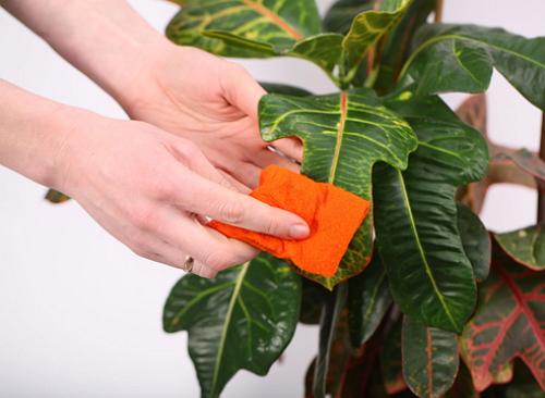 Уход за растениями в системах вертикального озеленения