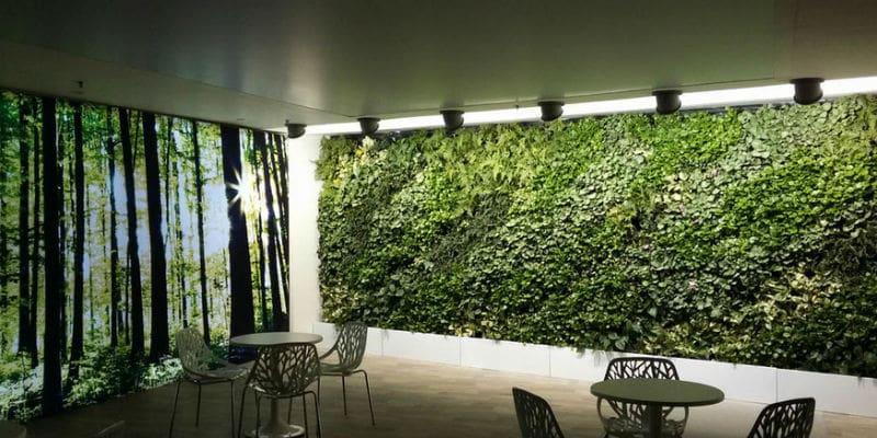 Способы вертикального озеленения