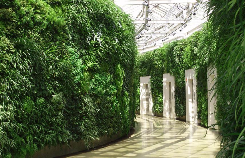 Вертикальное озеленение живыми растениями