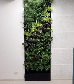 Озеленение интерьера НГУ с помощью фитостен