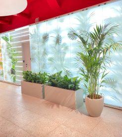 Флористическое оформление нового офиса Альфа банка г. Новосибирск